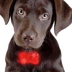 Φωτεινό Κολάρο για Σκύλους